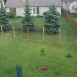 Fence Posts 1